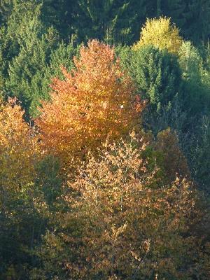 Herbst ist Schwedenbitter-Zeit