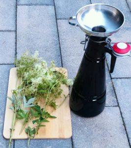 Wiesengeißbart Tee selber machen